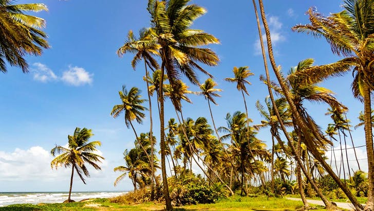Caribbean grooves from Trinidad and Tobago
